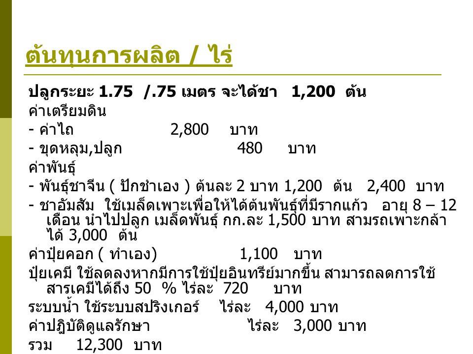 ต้นทุนการผลิต / ไร่ ปลูกระยะ 1.75 /.75 เมตร จะได้ชา 1,200 ต้น ค่าเตรียมดิน - ค่าไถ 2,800 บาท - ขุดหลุม, ปลูก 480 บาท ค่าพันธุ์ - พันธุ์ชาจีน ( ปักชำเอ