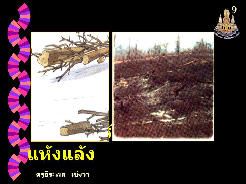 ครูธีระพล เข่งวา 8 2. การตัดไม้ ทำลายป่า