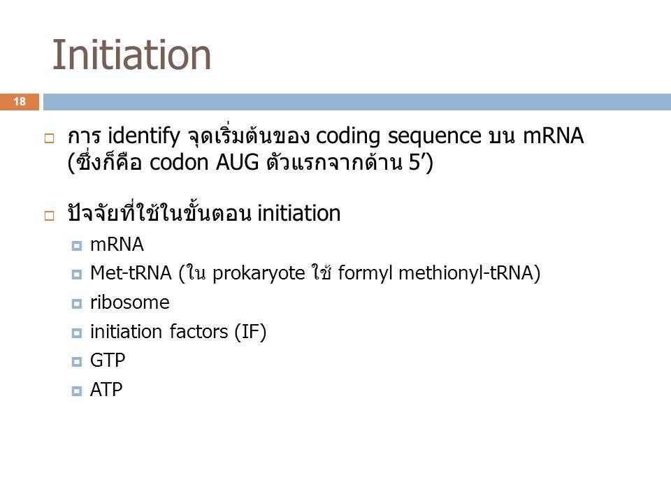 Initiation  การ identify จุดเริ่มต้นของ coding sequence บน mRNA (ซึ่งก็คือ codon AUG ตัวแรกจากด้าน 5')  ปัจจัยที่ใช้ในขั้นตอน initiation  mRNA  Me