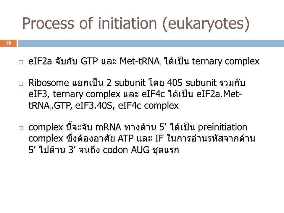 Process of initiation (eukaryotes)  eIF2a จับกับ GTP และ Met-tRNA i ได้เป็น ternary complex  Ribosome แยกเป็น 2 subunit โดย 40S subunit รวมกับ eIF3,