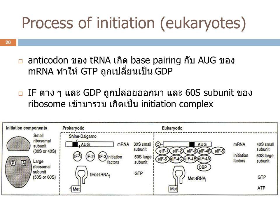 Process of initiation (eukaryotes)  anticodon ของ tRNA เกิด base pairing กับ AUG ของ mRNA ทำให้ GTP ถูกเปลี่ยนเป็น GDP  IF ต่าง ๆ และ GDP ถูกปล่อยออ