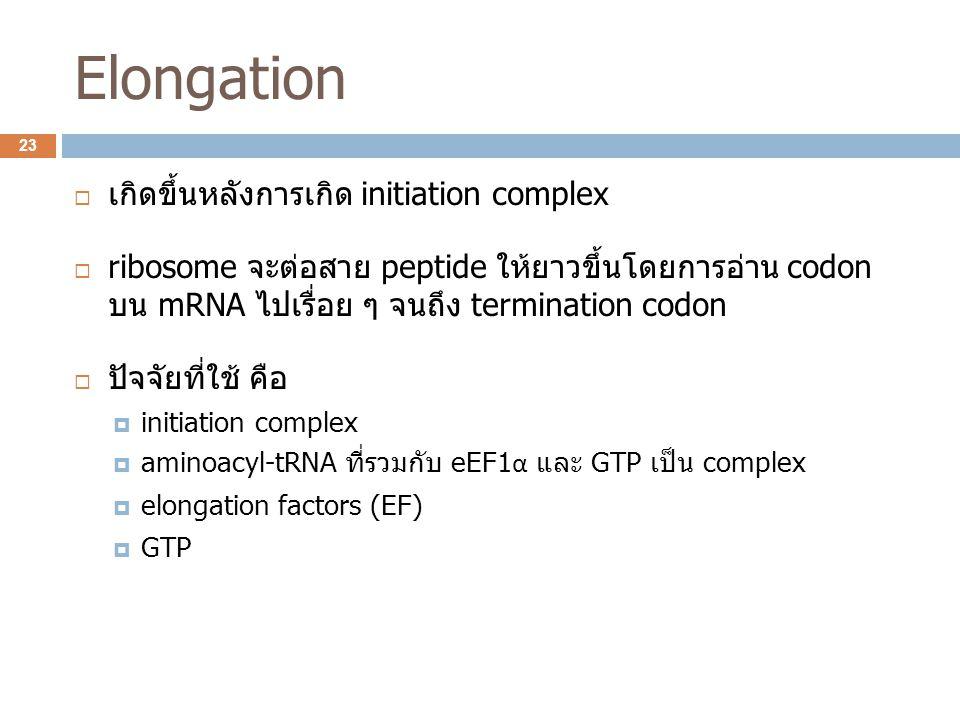 Elongation  เกิดขึ้นหลังการเกิด initiation complex  ribosome จะต่อสาย peptide ให้ยาวขึ้นโดยการอ่าน codon บน mRNA ไปเรื่อย ๆ จนถึง termination codon