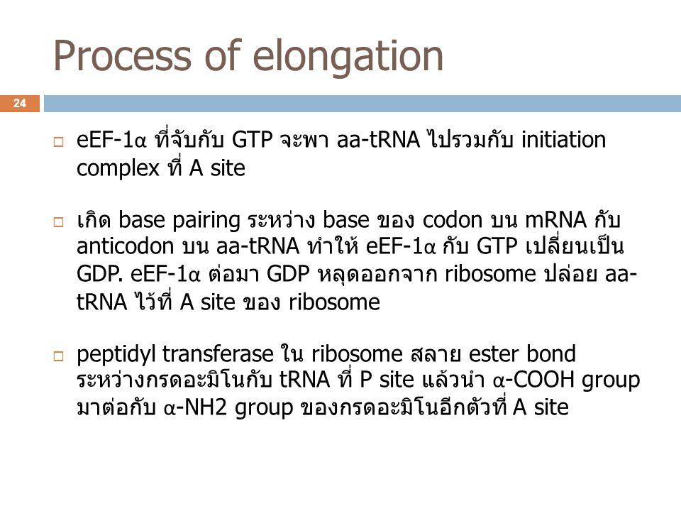 Process of elongation  eEF-1 α ที่จับกับ GTP จะพา aa-tRNA ไปรวมกับ initiation complex ที่ A site  เกิด base pairing ระหว่าง base ของ codon บน mRNA ก