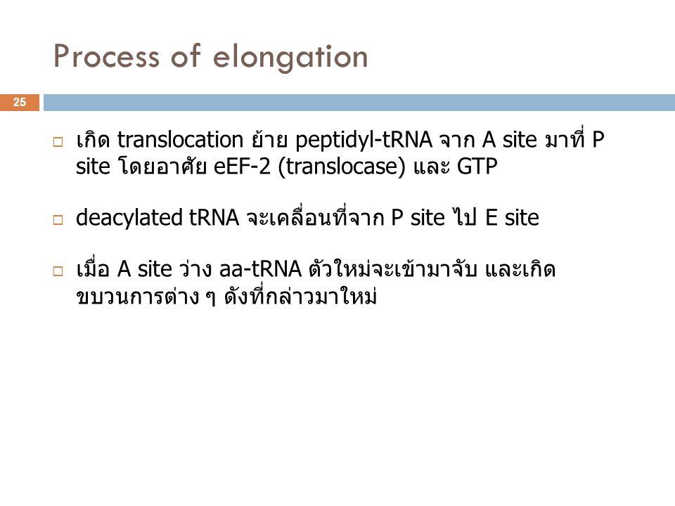 Process of elongation  เกิด translocation ย้าย peptidyl-tRNA จาก A site มาที่ P site โดยอาศัย eEF-2 (translocase) และ GTP  deacylated tRNA จะเคลื่อน
