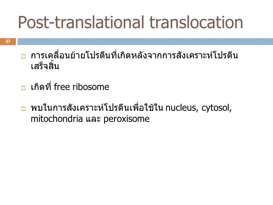 Post-translational translocation  การเคลื่อนย้ายโปรตีนที่เกิดหลังจากการสังเคราะห์โปรตีน เสร็จสิ้น  เกิดที่ free ribosome  พบในการสังเคราะห์โปรตีนเพ