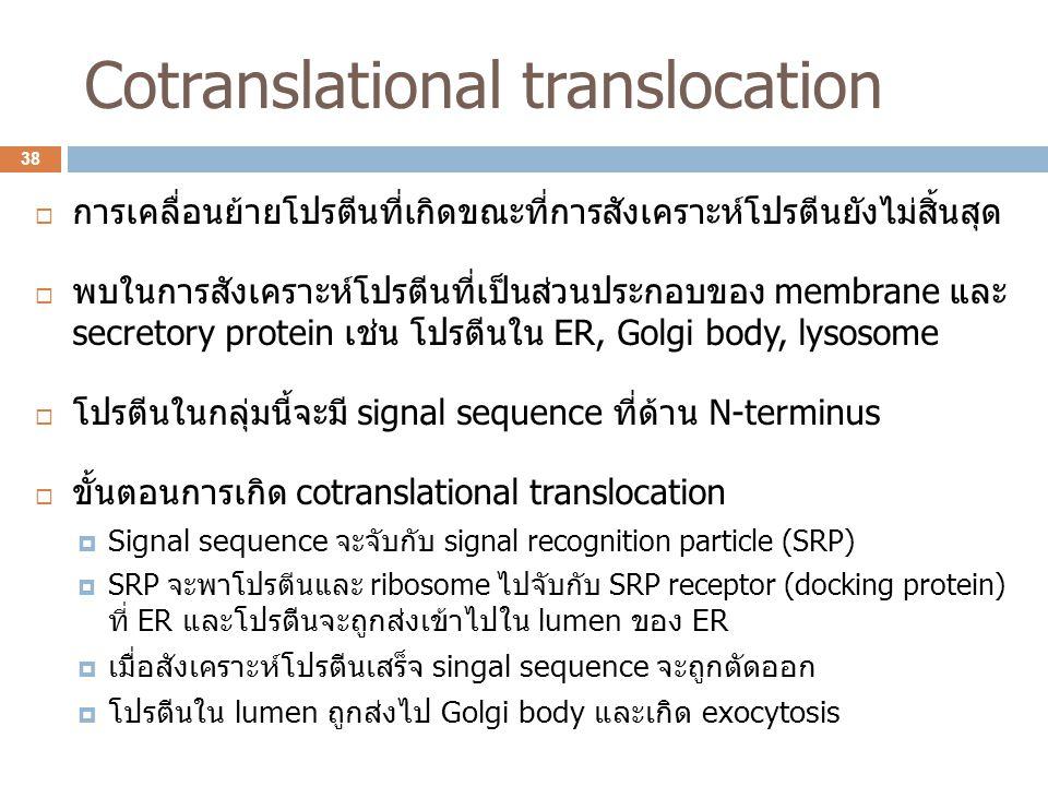 Cotranslational translocation  การเคลื่อนย้ายโปรตีนที่เกิดขณะที่การสังเคราะห์โปรตีนยังไม่สิ้นสุด  พบในการสังเคราะห์โปรตีนที่เป็นส่วนประกอบของ membra