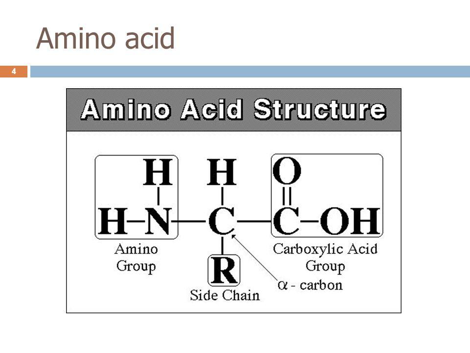 Aminoacyl-tRNA synthetase  การจับกันของกรดอะมิโนกับ tRNA เกิดจาก α -COOH group ของ กรดอะมิโนกับ 3'-OH group ของ tRNA จับกัน เกิดเป็น high energy ester bond ซึ่งพลังงานของพันธะนี้จะใช้ในการสังเคราะห์ peptide bond ต่อไป  เอนไซม์นี้ยังสามารถ proofreading ตรวจสอบ aa-tRNA ที่เกิดขึ้น โดยถ้า aa-tRNA มีโครงสร้างที่ผิด เอนไซม์จะสลาย aa-tRNA กลับเป็นกรดอะมิโนและ tRNA 15