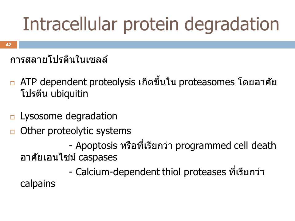 Intracellular protein degradation การสลายโปรตีนในเซลล์  ATP dependent proteolysis เกิดขึ้นใน proteasomes โดยอาศัย โปรตีน ubiquitin  Lysosome degrada