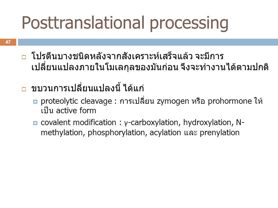 Posttranslational processing  โปรตีนบางชนิดหลังจากสังเคราะห์เสร็จแล้ว จะมีการ เปลี่ยนแปลงภายในโมเลกุลของมันก่อน จึงจะทำงานได้ตามปกติ  ขบวนการเปลี่ยน
