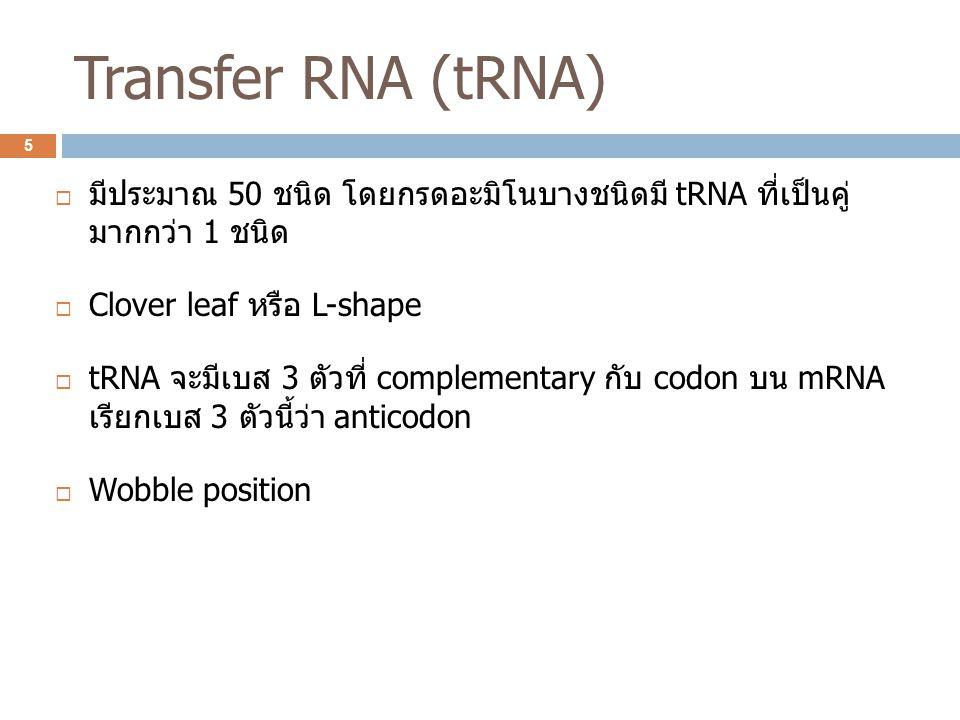 Transfer RNA (tRNA)  มีประมาณ 50 ชนิด โดยกรดอะมิโนบางชนิดมี tRNA ที่เป็นคู่ มากกว่า 1 ชนิด  Clover leaf หรือ L-shape  tRNA จะมีเบส 3 ตัวที่ complem