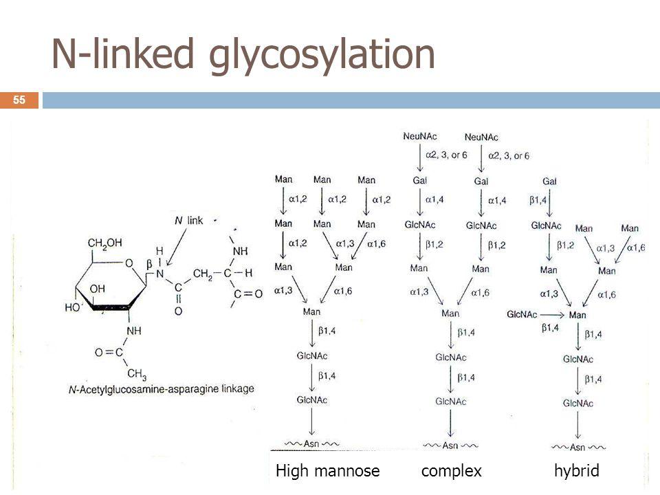 N-linked glycosylation High mannose complex hybrid 55