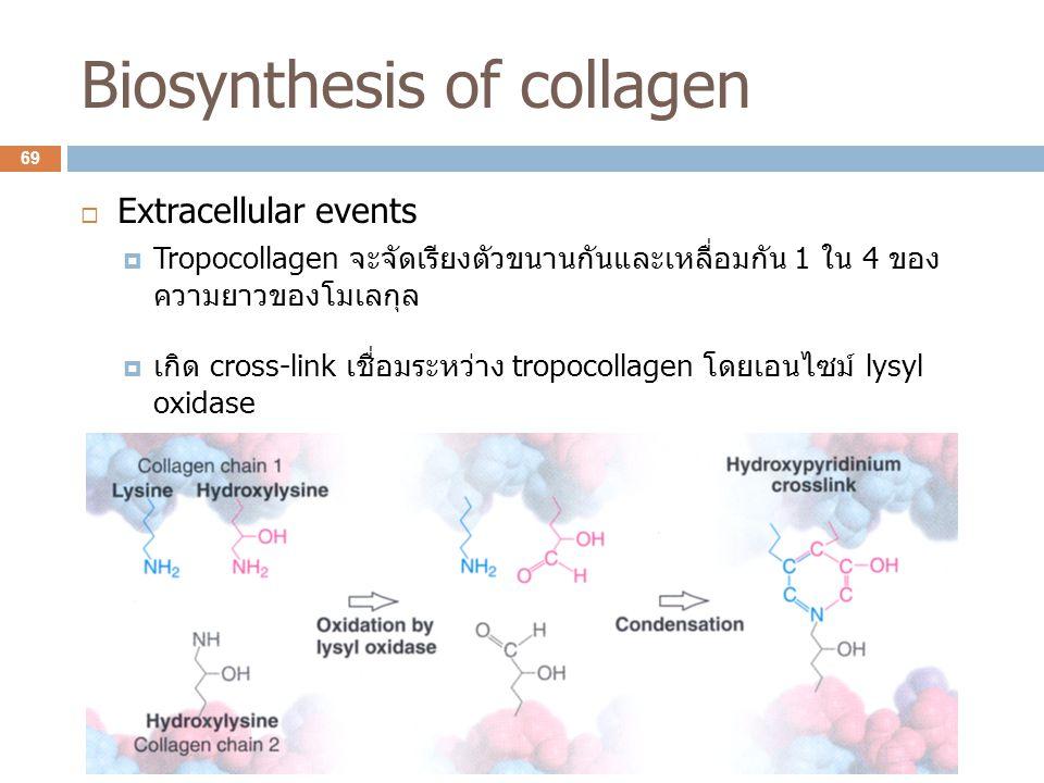 Biosynthesis of collagen  Extracellular events  Tropocollagen จะจัดเรียงตัวขนานกันและเหลื่อมกัน 1 ใน 4 ของ ความยาวของโมเลกุล  เกิด cross-link เชื่อ