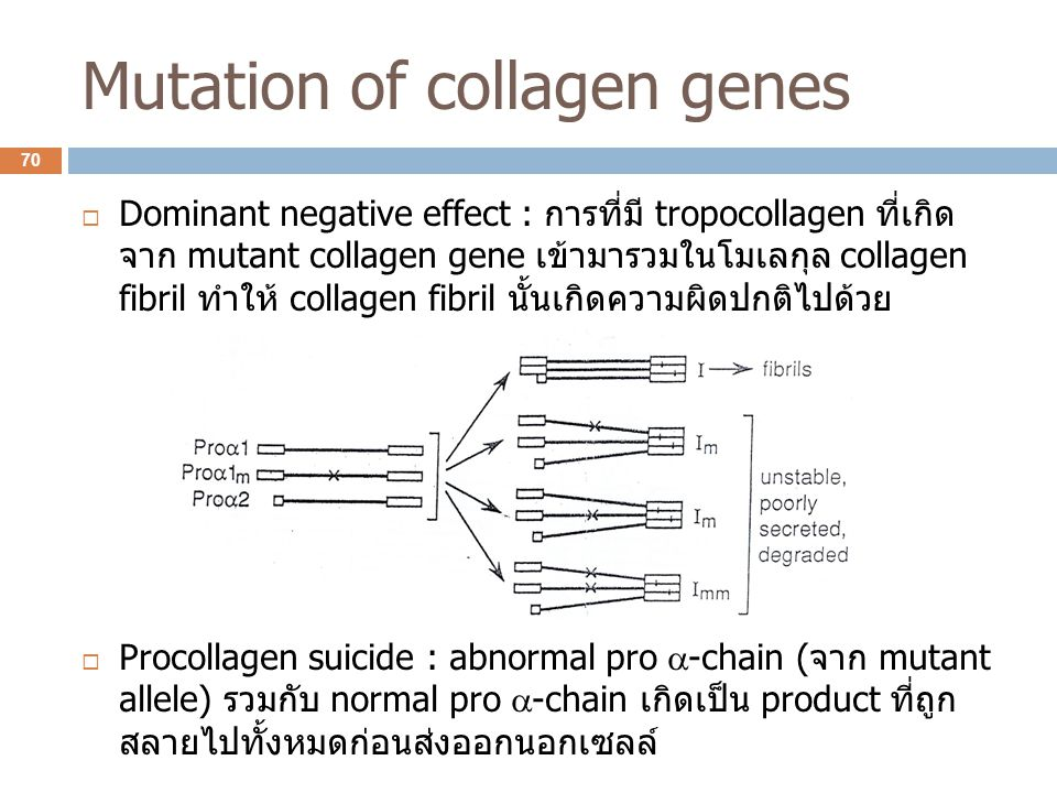 Mutation of collagen genes  Dominant negative effect : การที่มี tropocollagen ที่เกิด จาก mutant collagen gene เข้ามารวมในโมเลกุล collagen fibril ทำใ