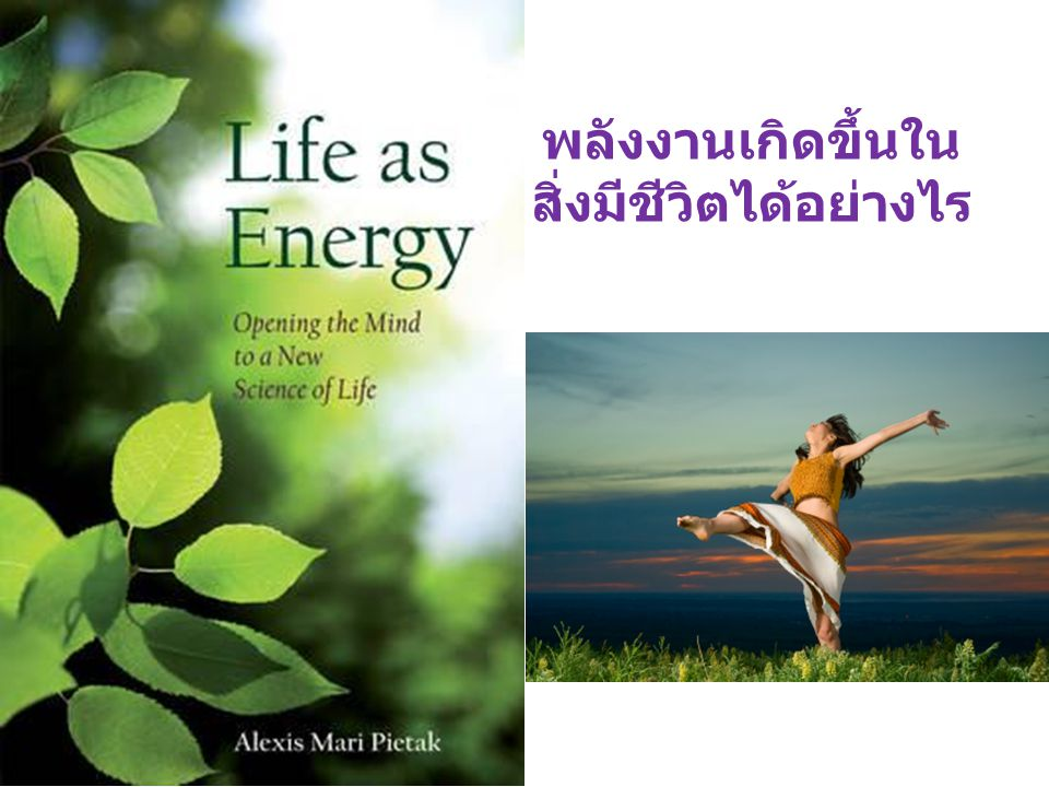 All living things obtain the energy they need by metabolizing energy-rich compounds, such as carbohydrates and fats อาหารชนิดใดบ้าง ที่ให้ พลังงาน .