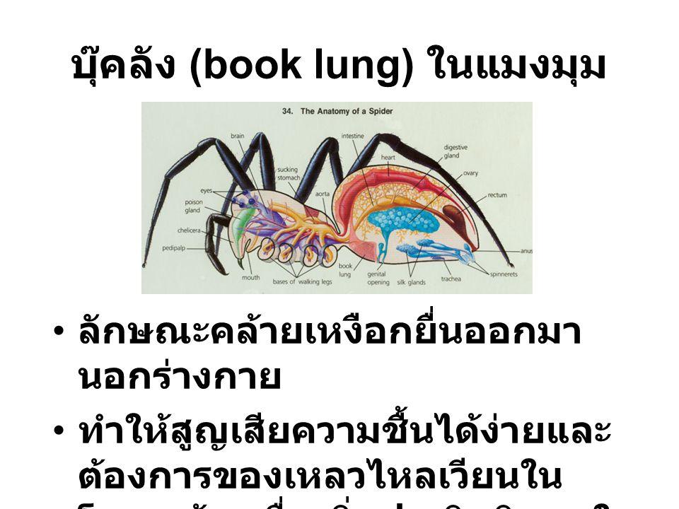 บุ๊คลัง (book lung) ในแมงมุม ลักษณะคล้ายเหงือกยื่นออกมา นอกร่างกาย ทำให้สูญเสียความชื้นได้ง่ายและ ต้องการของเหลวไหลเวียนใน โครงสร้างเพื่อเพิ่มประสิทธิ