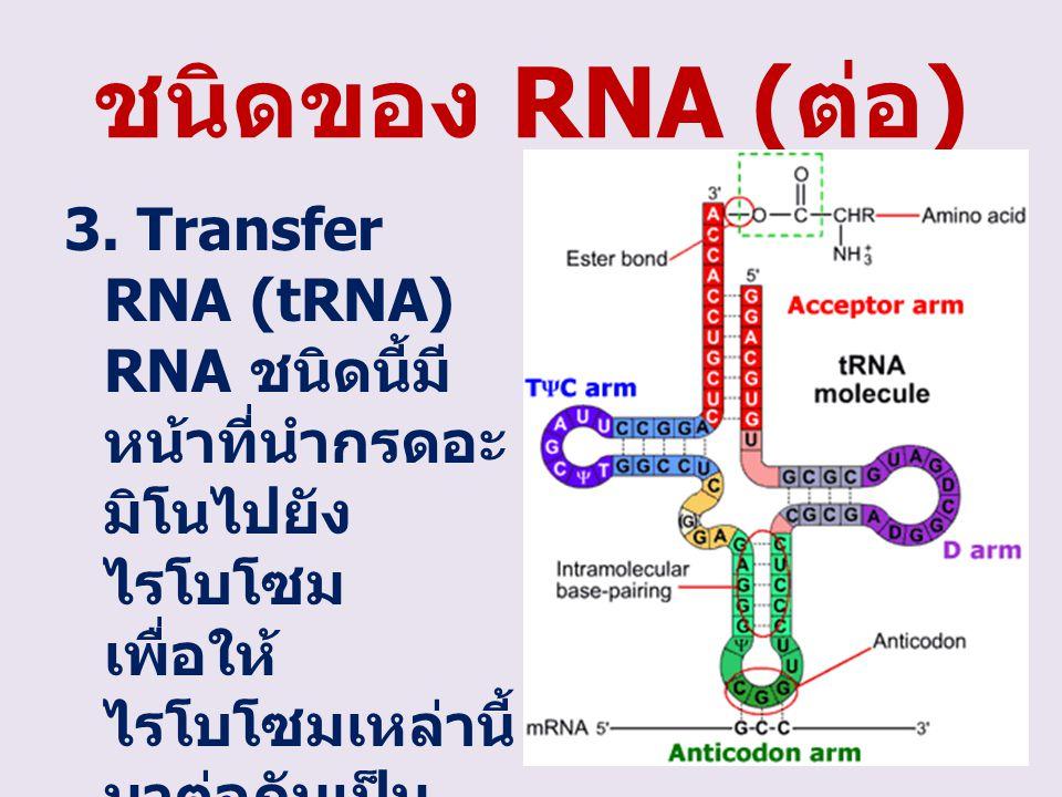 ชนิดของ RNA ( ต่อ ) 3. Transfer RNA (tRNA) RNA ชนิดนี้มี หน้าที่นำกรดอะ มิโนไปยัง ไรโบโซม เพื่อให้ ไรโบโซมเหล่านี้ มาต่อกันเป็น โพลีเปปไทด์ ต่อไป