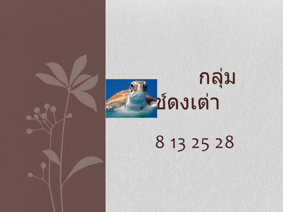 8 13 25 28 กลุ่ม เบนซ์ดงเต่า