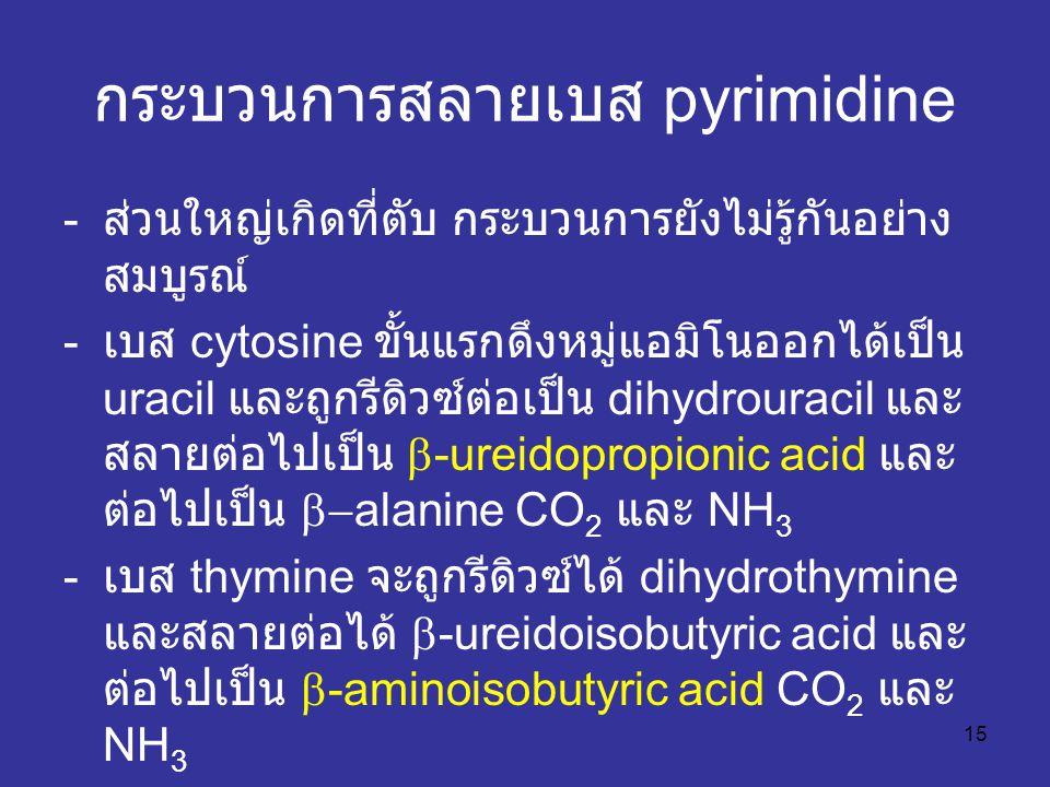 15 กระบวนการสลายเบส pyrimidine - ส่วนใหญ่เกิดที่ตับ กระบวนการยังไม่รู้กันอย่าง สมบูรณ์ - เบส cytosine ขั้นแรกดึงหมู่แอมิโนออกได้เป็น uracil และถูกรีดิวซ์ต่อเป็น dihydrouracil และ สลายต่อไปเป็น  -ureidopropionic acid และ ต่อไปเป็น  -alanine CO 2 และ NH 3 - เบส thymine จะถูกรีดิวซ์ได้ dihydrothymine และสลายต่อได้  -ureidoisobutyric acid และ ต่อไปเป็น  -aminoisobutyric acid CO 2 และ NH 3
