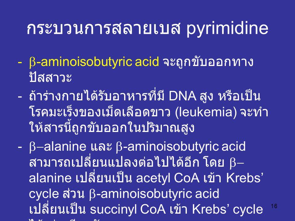 16 กระบวนการสลายเบส pyrimidine -  -aminoisobutyric acid จะถูกขับออกทาง ปัสสาวะ - ถ้าร่างกายได้รับอาหารที่มี DNA สูง หรือเป็น โรคมะเร็งของเม็ดเลือดขาว