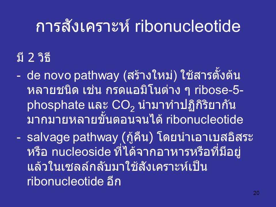 20 การสังเคราะห์ ribonucleotide มี 2 วิธี -de novo pathway ( สร้างใหม่ ) ใช้สารตั้งต้น หลายชนิด เช่น กรดแอมิโนต่าง ๆ ribose-5- phosphate และ CO 2 นำมาทำปฏิกิริยากัน มากมายหลายขั้นตอนจนได้ ribonucleotide -salvage pathway ( กู้คืน ) โดยนำเอาเบสอิสระ หรือ nucleoside ที่ได้จากอาหารหรือที่มีอยู่ แล้วในเซลล์กลับมาใช้สังเคราะห์เป็น ribonucleotide อีก