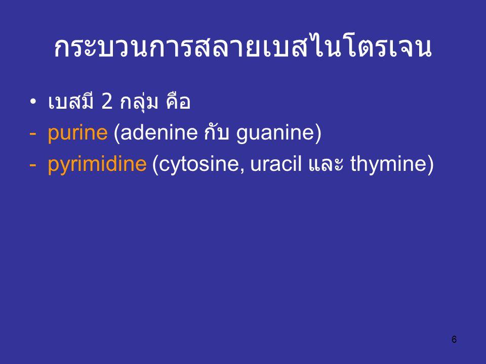 6 กระบวนการสลายเบสไนโตรเจน เบสมี 2 กลุ่ม คือ -purine (adenine กับ guanine) -pyrimidine (cytosine, uracil และ thymine)
