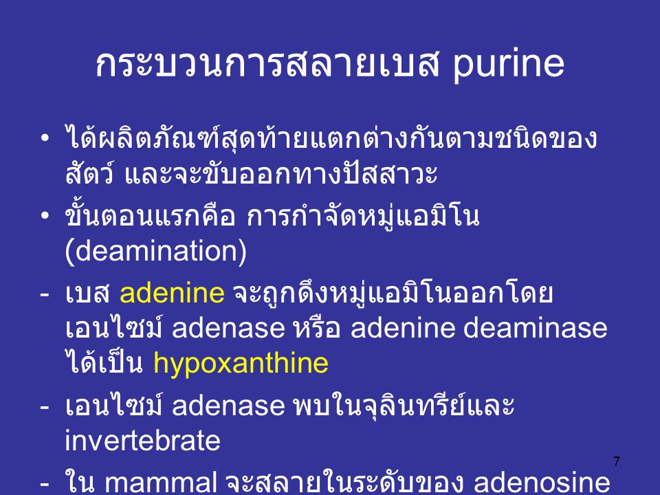 7 กระบวนการสลายเบส purine ได้ผลิตภัณฑ์สุดท้ายแตกต่างกันตามชนิดของ สัตว์ และจะขับออกทางปัสสาวะ ขั้นตอนแรกคือ การกำจัดหมู่แอมิโน (deamination) - เบส adenine จะถูกดึงหมู่แอมิโนออกโดย เอนไซม์ adenase หรือ adenine deaminase ได้เป็น hypoxanthine - เอนไซม์ adenase พบในจุลินทรีย์และ invertebrate - ใน mammal จะสลายในระดับของ adenosine