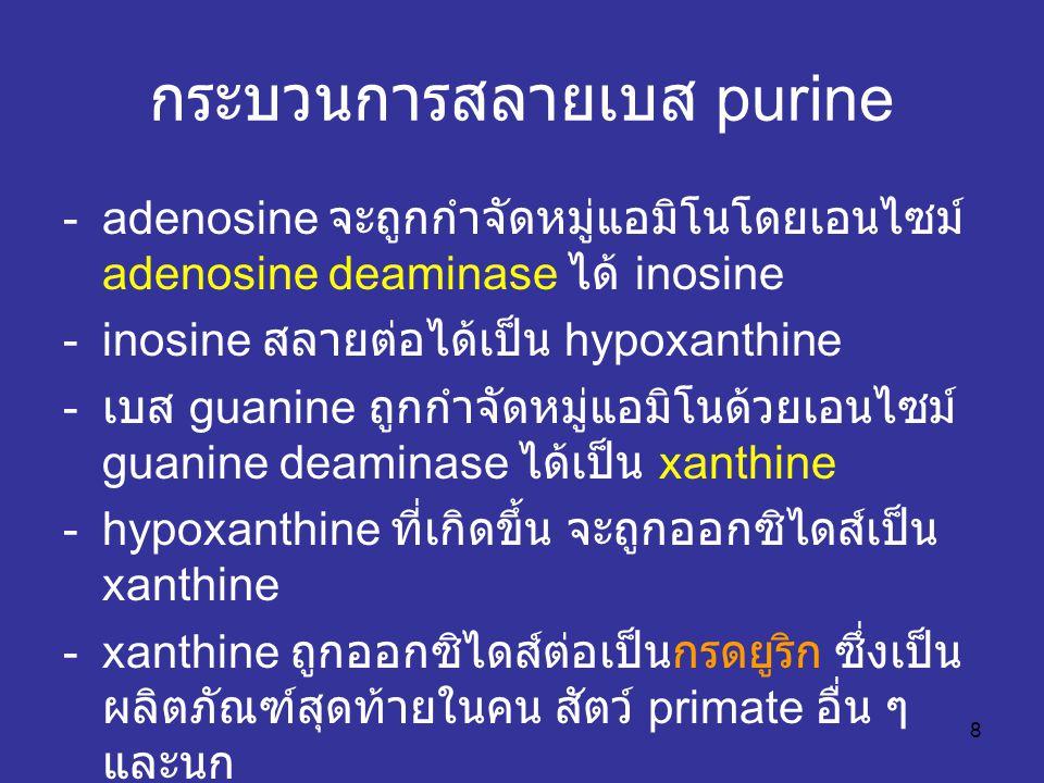 8 กระบวนการสลายเบส purine -adenosine จะถูกกำจัดหมู่แอมิโนโดยเอนไซม์ adenosine deaminase ได้ inosine -inosine สลายต่อได้เป็น hypoxanthine - เบส guanine ถูกกำจัดหมู่แอมิโนด้วยเอนไซม์ guanine deaminase ได้เป็น xanthine -hypoxanthine ที่เกิดขึ้น จะถูกออกซิไดส์เป็น xanthine -xanthine ถูกออกซิไดส์ต่อเป็นกรดยูริก ซึ่งเป็น ผลิตภัณฑ์สุดท้ายในคน สัตว์ primate อื่น ๆ และนก