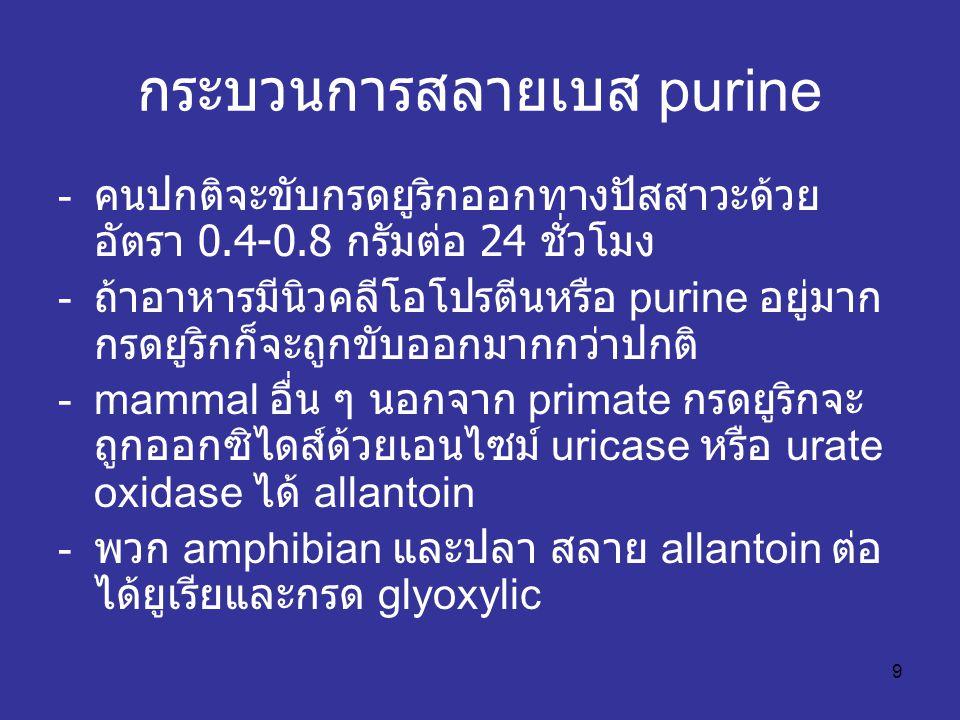 9 กระบวนการสลายเบส purine - คนปกติจะขับกรดยูริกออกทางปัสสาวะด้วย อัตรา 0.4-0.8 กรัมต่อ 24 ชั่วโมง - ถ้าอาหารมีนิวคลีโอโปรตีนหรือ purine อยู่มาก กรดยูริกก็จะถูกขับออกมากกว่าปกติ -mammal อื่น ๆ นอกจาก primate กรดยูริกจะ ถูกออกซิไดส์ด้วยเอนไซม์ uricase หรือ urate oxidase ได้ allantoin - พวก amphibian และปลา สลาย allantoin ต่อ ได้ยูเรียและกรด glyoxylic