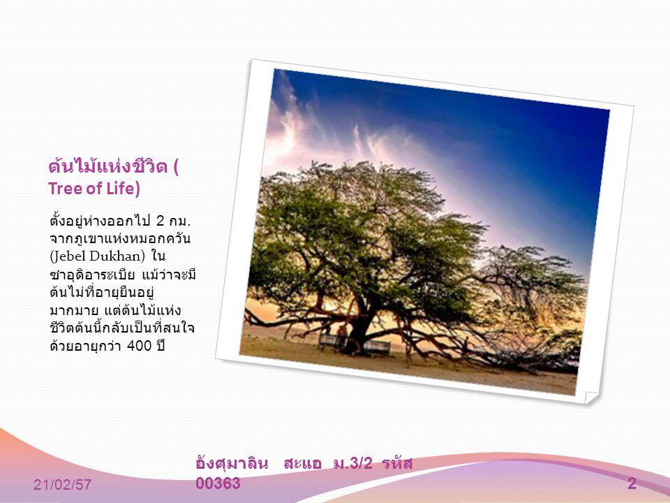 ต้นไม้แห่งชีวิต ( Tree of Life) ตั้งอยู่ห่างออกไป 2 กม. จากภูเขาแห่งหมอกควัน (Jebel Dukhan) ใน ซาอุดิอาระเบีย แม้ว่าจะมี ต้นไม่ที่อายุยืนอยู่ มากมาย แ