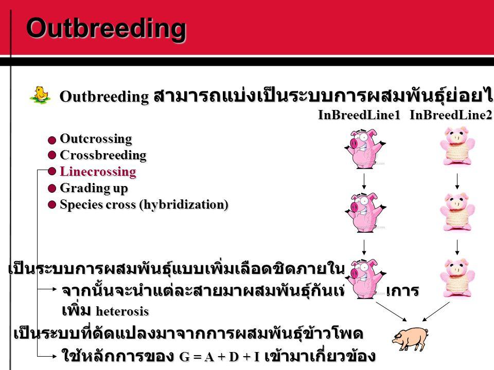 Outbreeding OutcrossingCrossbreedingLinecrossing Grading up Species cross (hybridization) Outbreeding สามารถแบ่งเป็นระบบการผสมพันธุ์ย่อยได้ดังนี้ เป็น