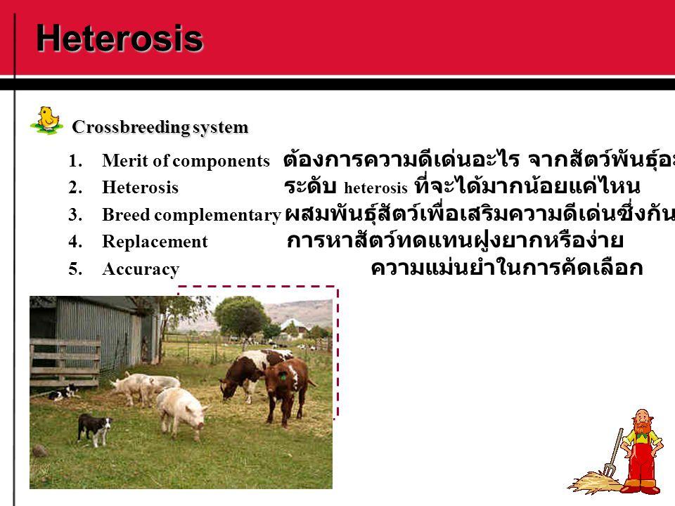 Heterosis Crossbreeding system 1.Merit of components ต้องการความดีเด่นอะไร จากสัตว์พันธุ์อะไร 2.Heterosis ระดับ heterosis ที่จะได้มากน้อยแค่ไหน 3.Bree
