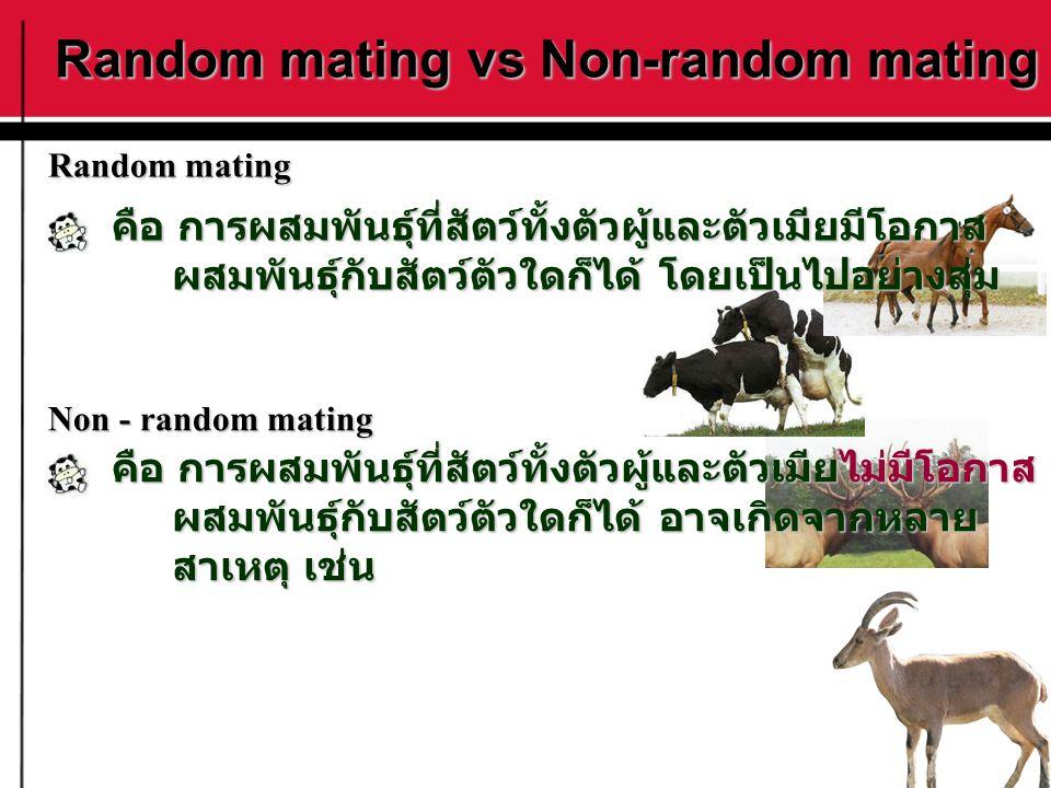 Random mating vs Non-random mating คือ การผสมพันธุ์ที่สัตว์ทั้งตัวผู้และตัวเมียมีโอกาส ผสมพันธุ์กับสัตว์ตัวใดก็ได้ โดยเป็นไปอย่างสุ่ม ผสมพันธุ์กับสัตว