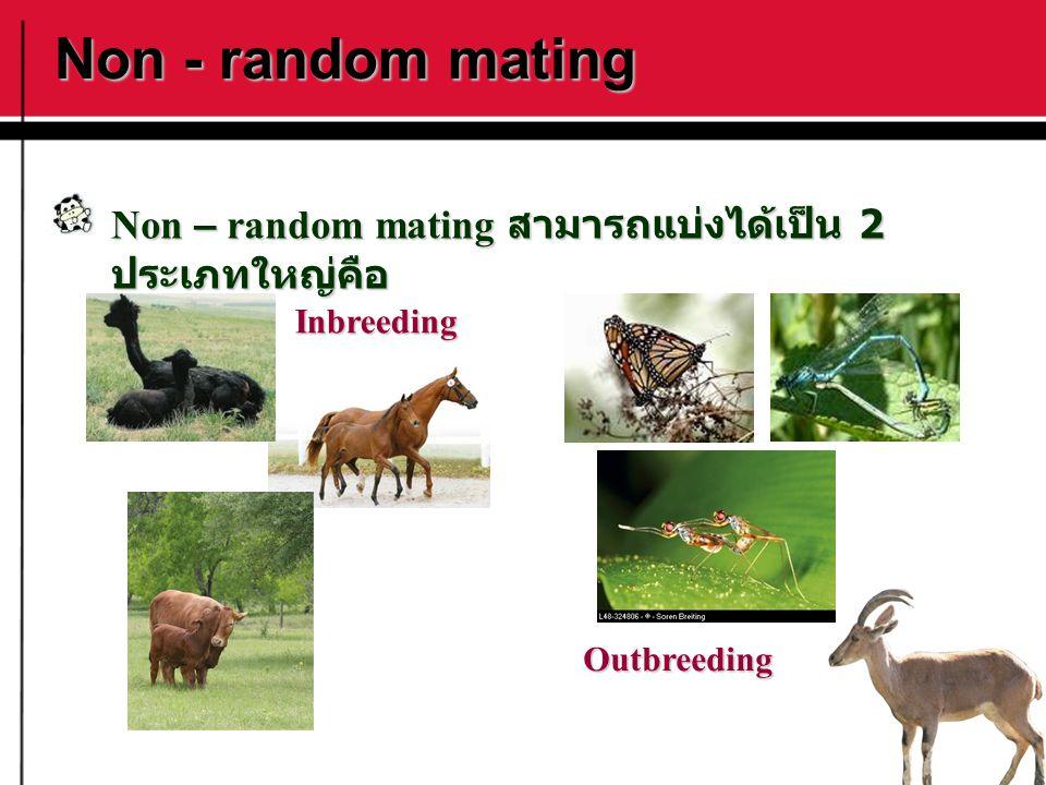 Non - random mating Non – random mating สามารถแบ่งได้เป็น 2 ประเภทใหญ่คือ Inbreeding Outbreeding