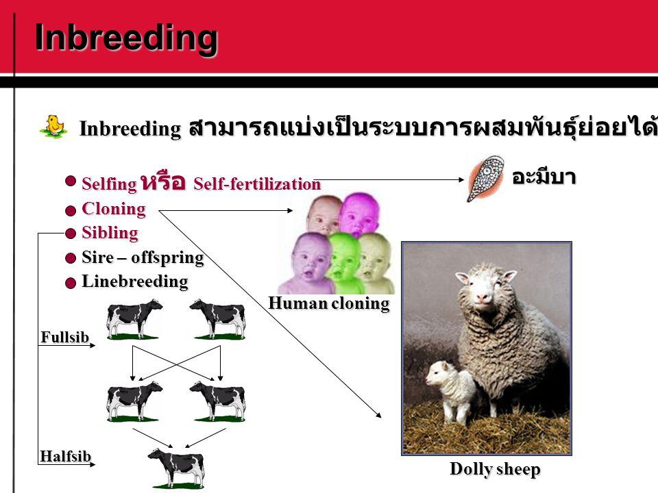 Inbreeding Selfing หรือ Self-fertilization CloningSibling Sire – offspring Linebreeding Inbreeding สามารถแบ่งเป็นระบบการผสมพันธุ์ย่อยได้ดังนี้ อะมีบา