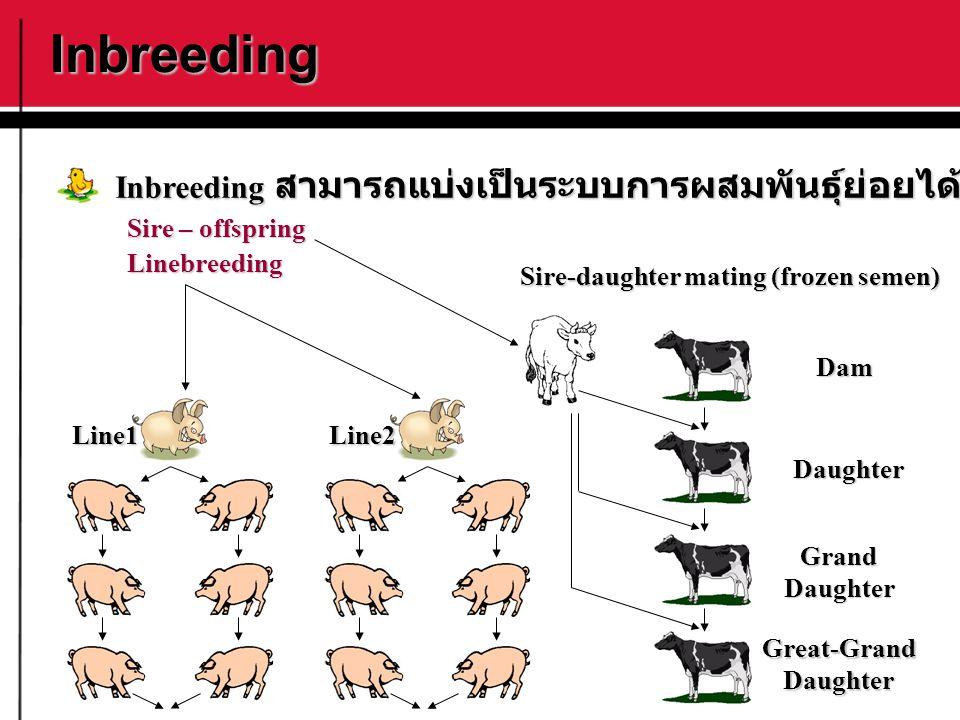 Inbreeding Sire – offspring Linebreeding Inbreeding สามารถแบ่งเป็นระบบการผสมพันธุ์ย่อยได้ดังนี้ Dam Daughter GrandDaughter Great-GrandDaughter Sire-da