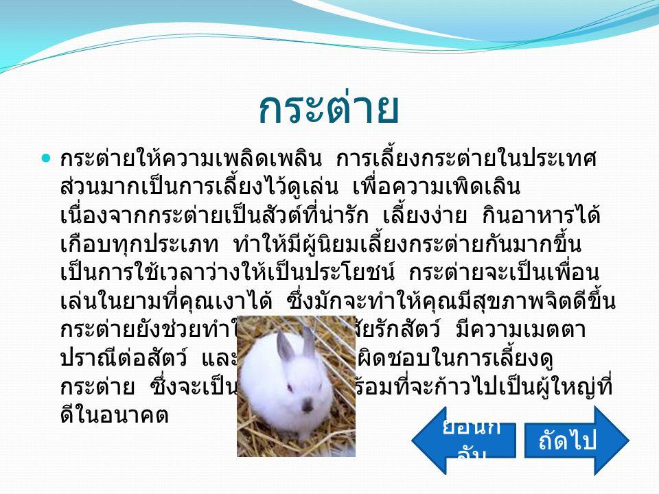 กระต่าย กระต่ายให้ความเพลิดเพลิน การเลี้ยงกระต่ายในประเทศ ส่วนมากเป็นการเลี้ยงไว้ดูเล่น เพื่อความเพิดเลิน เนื่องจากกระต่ายเป็นสัวต์ที่น่ารัก เลี้ยงง่า