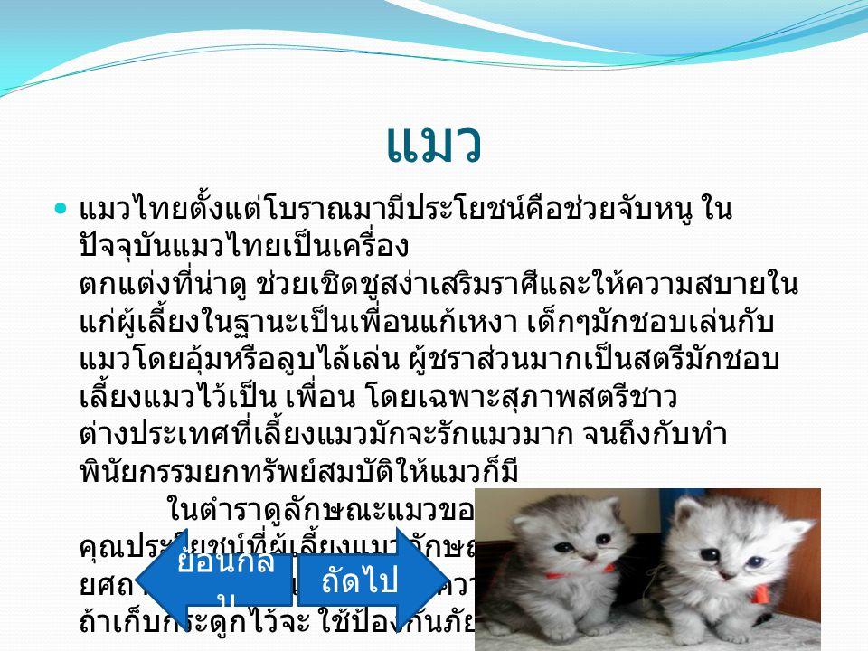แมว แมวไทยตั้งแต่โบราณมามีประโยชน์คือช่วยจับหนู ใน ปัจจุบันแมวไทยเป็นเครื่อง ตกแต่งที่น่าดู ช่วยเชิดชูสง่าเสริมราศีและให้ความสบายใน แก่ผู้เลี้ยงในฐานะ