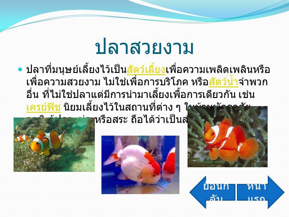 ปลาสวยงาม ปลาที่มนุษย์เลี้ยงไว้เป็นสัตว์เลี้ยงเพื่อความเพลิดเพลินหรือ เพื่อความสวยงาม ไม่ใช่เพื่อการบริโภค หรือสัตว์น้ำจำพวก อื่น ที่ไม่ใช่ปลาแต่มีการ