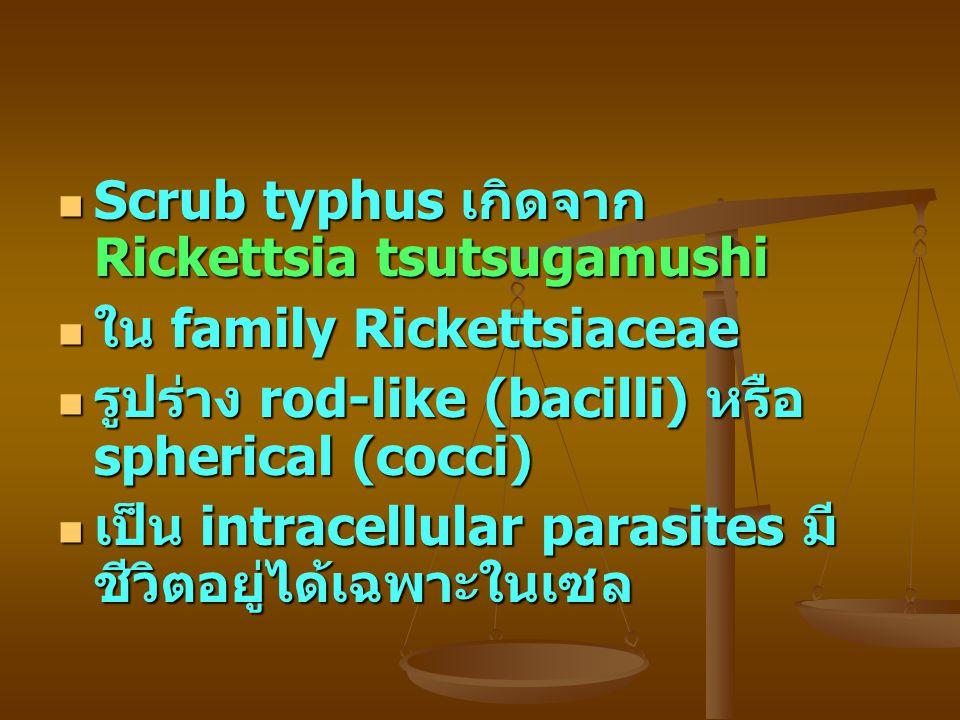 Scrub typhus เกิดจาก Rickettsia tsutsugamushi Scrub typhus เกิดจาก Rickettsia tsutsugamushi ใน family Rickettsiaceae ใน family Rickettsiaceae รูปร่าง