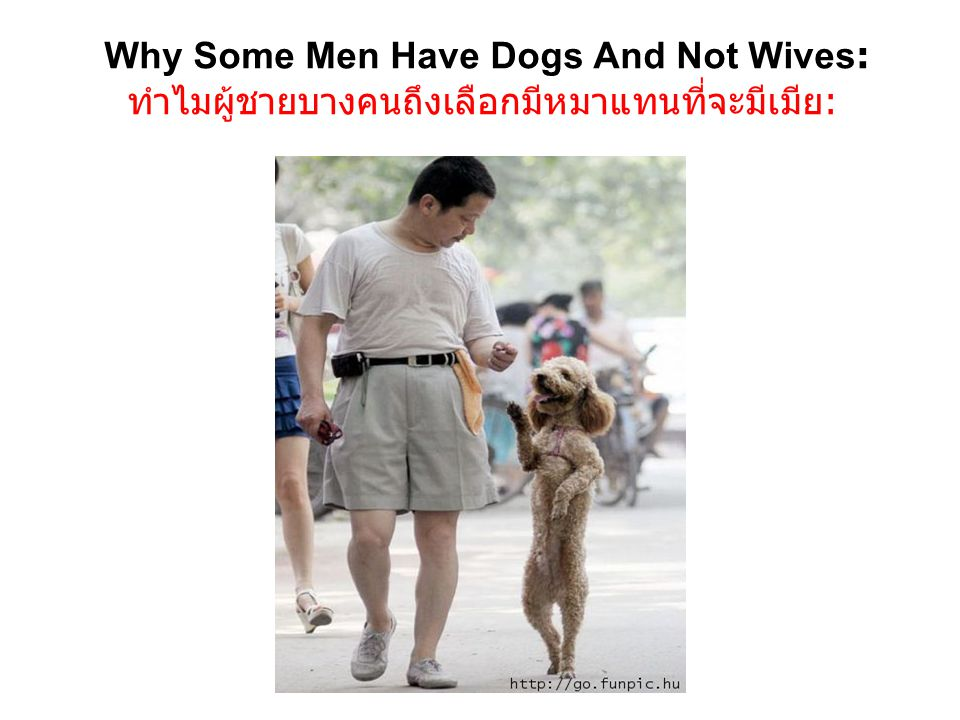 Why Some Men Have Dogs And Not Wives: ทำไมผู้ชายบางคนถึงเลือกมีหมาแทนที่จะมีเมีย: