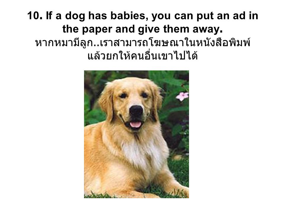 10. If a dog has babies, you can put an ad in the paper and give them away.