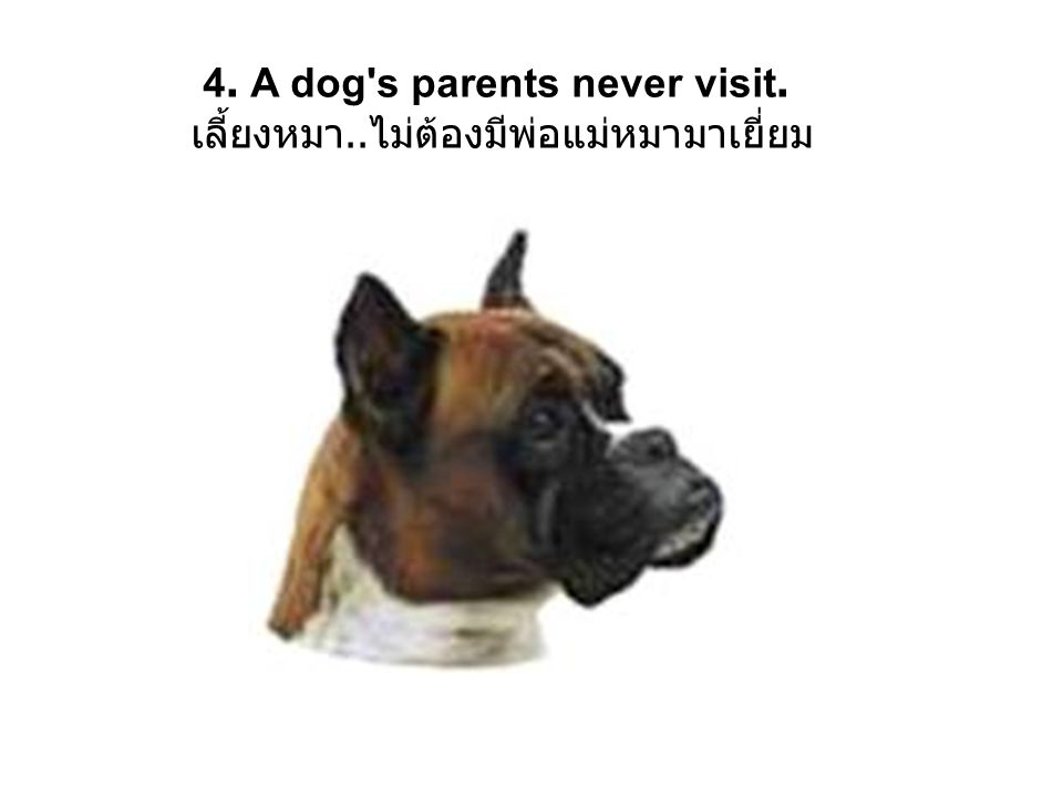 5.Dogs agree that you have to raise your voice to get your point across.