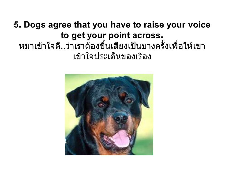 6.You never have to wait for a dog; they re ready to go 24 hours a day.