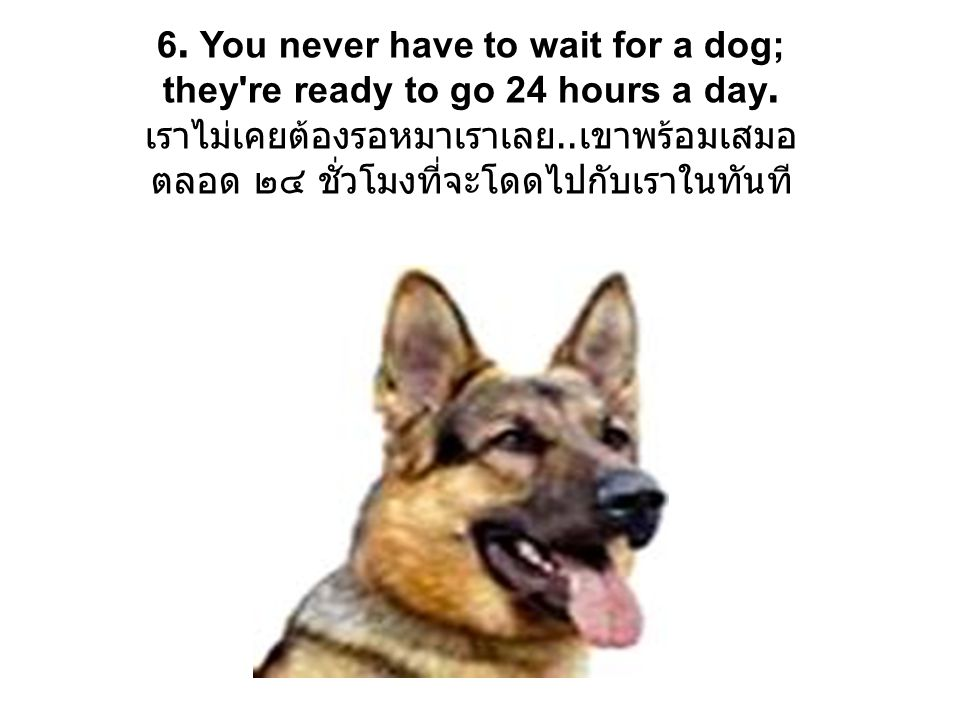 6. You never have to wait for a dog; they re ready to go 24 hours a day.