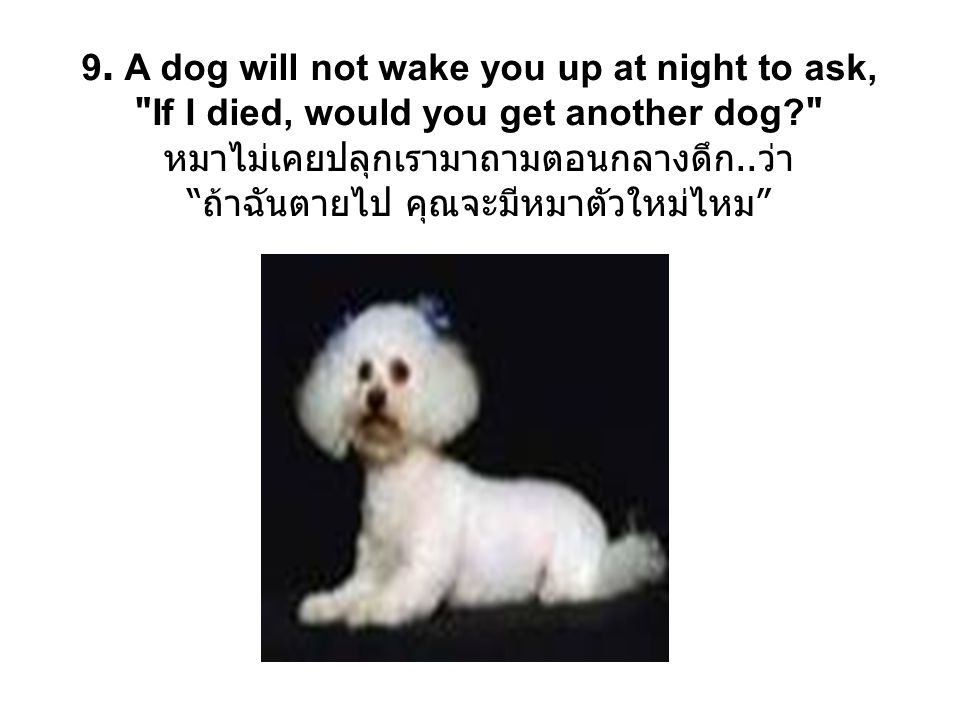 10.If a dog has babies, you can put an ad in the paper and give them away.