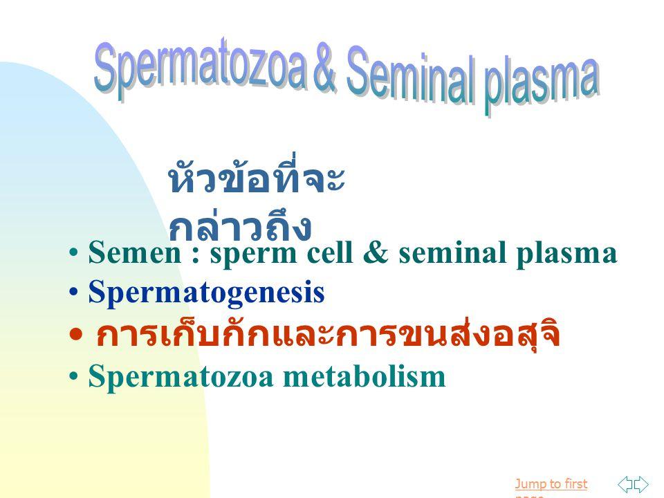Jump to first page หัวข้อที่จะ กล่าวถึง Semen : sperm cell & seminal plasma Spermatogenesis การเก็บกักและการขนส่งอสุจิ Spermatozoa metabolism