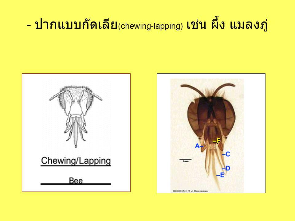 - ปากแบบกัดเลีย (chewing-lapping) เช่น ผึ้ง แมลงภู่