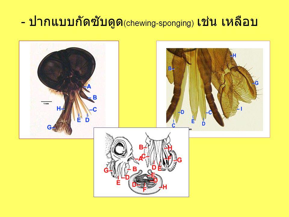- ปากแบบกัดซับดูด (chewing-sponging) เช่น เหลือบ