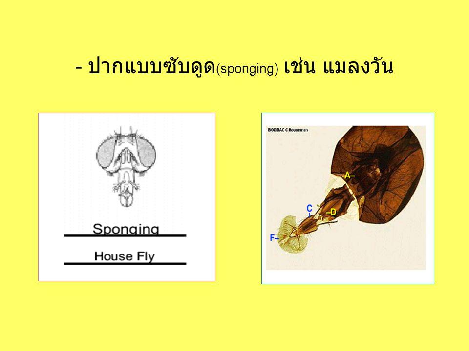 - ปากแบบซับดูด (sponging) เช่น แมลงวัน