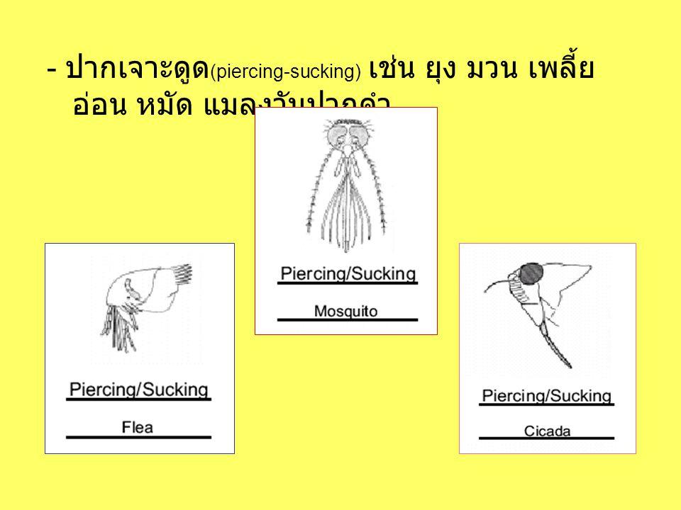 - ปากเจาะดูด (piercing-sucking) เช่น ยุง มวน เพลี้ย อ่อน หมัด แมลงวันปากดำ